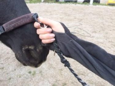 Gymnastizierung am Kappzaum Pferd