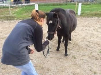 Körpersprache Pferdetraining