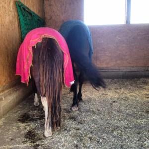 Pony Rosa Abschwitzdecke