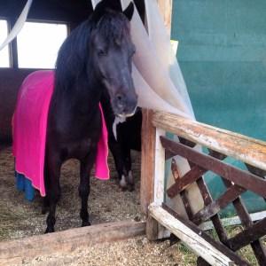 Pink Pferde