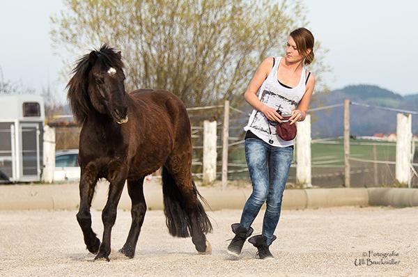 Clickertraining - Das Hüfttarget: So bewegst du das Hinterteil des Pferdes