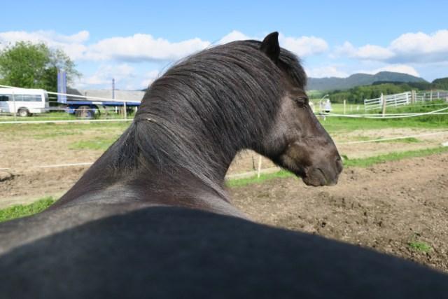 Familienaufstellung für mein Pferde