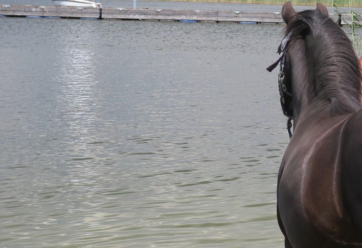 Erlernte Hilflosigkeit - Ich habe mit einem Pferd getanzt