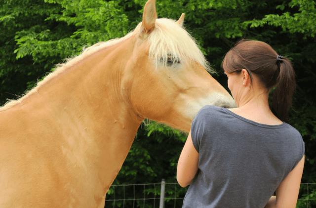Empathie Pferde