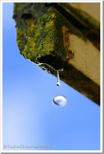 Day 92 - Drip, Drip, Drop