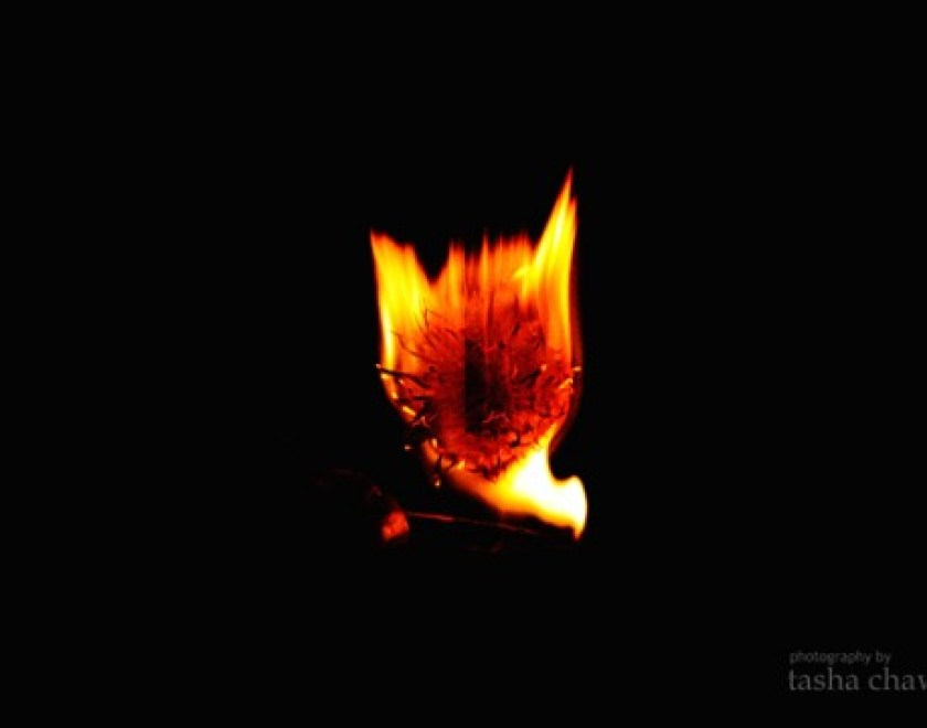 Dandelion Fire.1