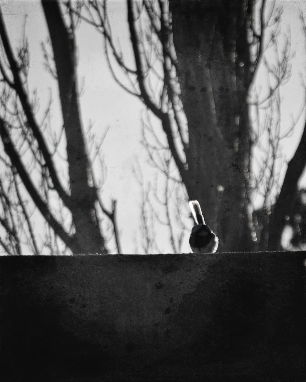 small-bird-on-a-fence