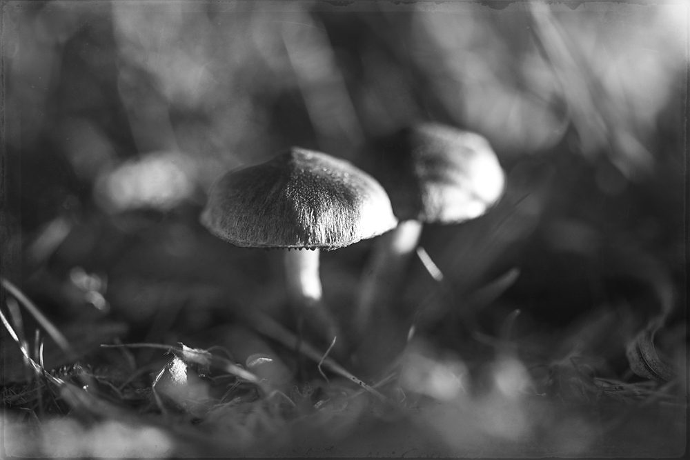 two-mushrooms-1