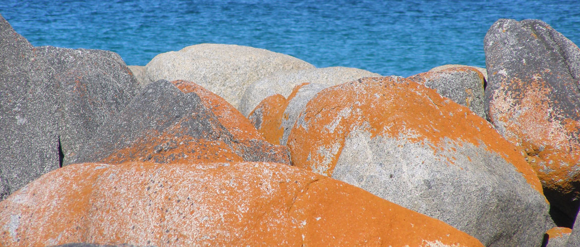 Lichen Covered Rocks at Bay of Fires