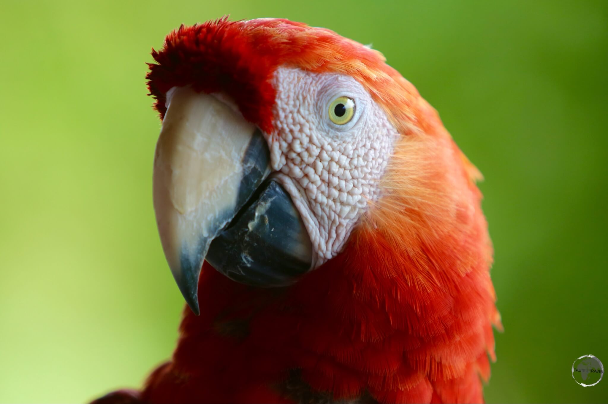 A curious Macaw.