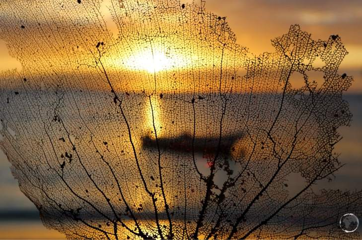 Sunset seen through a piece of fern coral at Morne Rouge beach