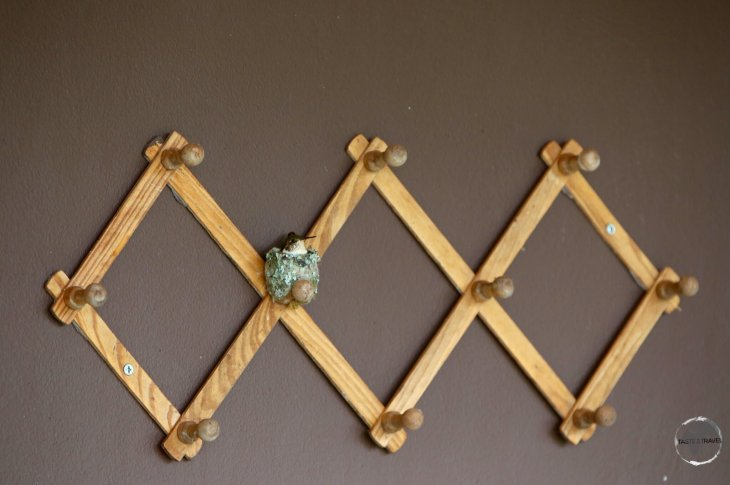 A coat rack serves as a nest for a tiny Scintillant hummingbird