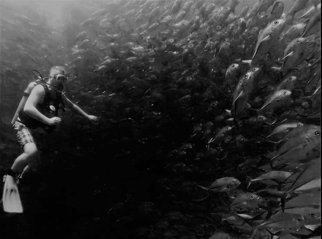 Diving on Sipadan Island