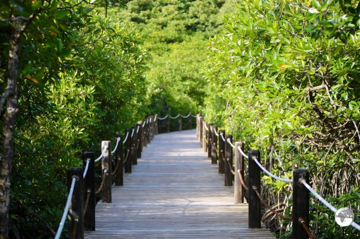 Palau Travel Report: Mangrove walkway at Papago International Resort, Airai state.
