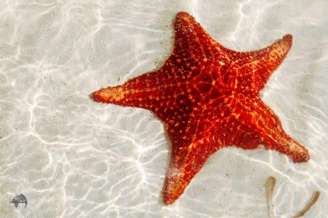 Starfish at Starfish Point.