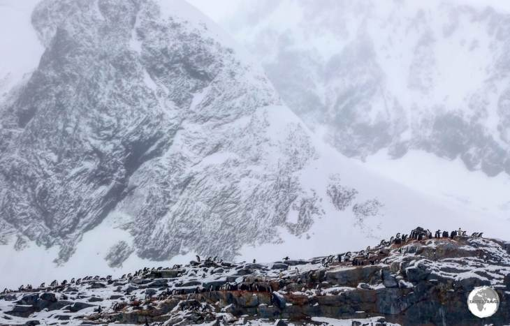 A Gentoo penguin colony on Petermann Island is dwarfed by the imposing peaks of Graham Land.