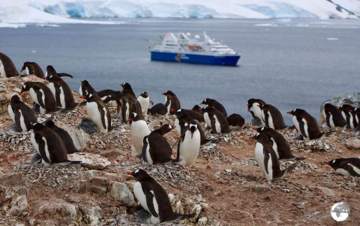 A Gentoo penguin colony on Cuverville Island, with the <i>Ocean Diamond</i> moored in the Errera Channel.