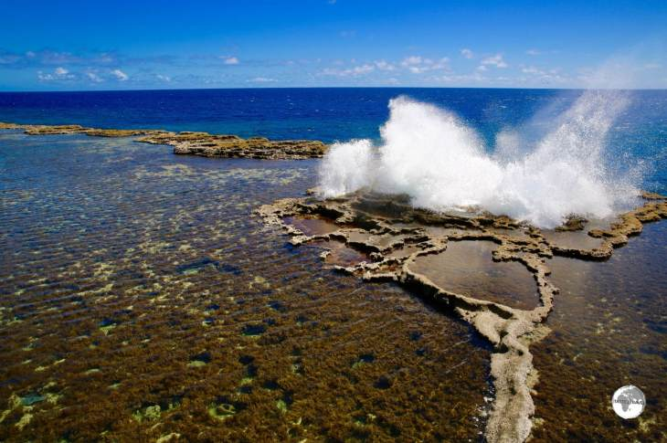 """Mapu'a Vaea"" are a series of blow holes located on the south coast of Tongatapu Island."