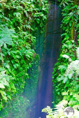 'Ana 'Ahu - a bottomless sink-hole in the middle of the rainforest on 'Eua.