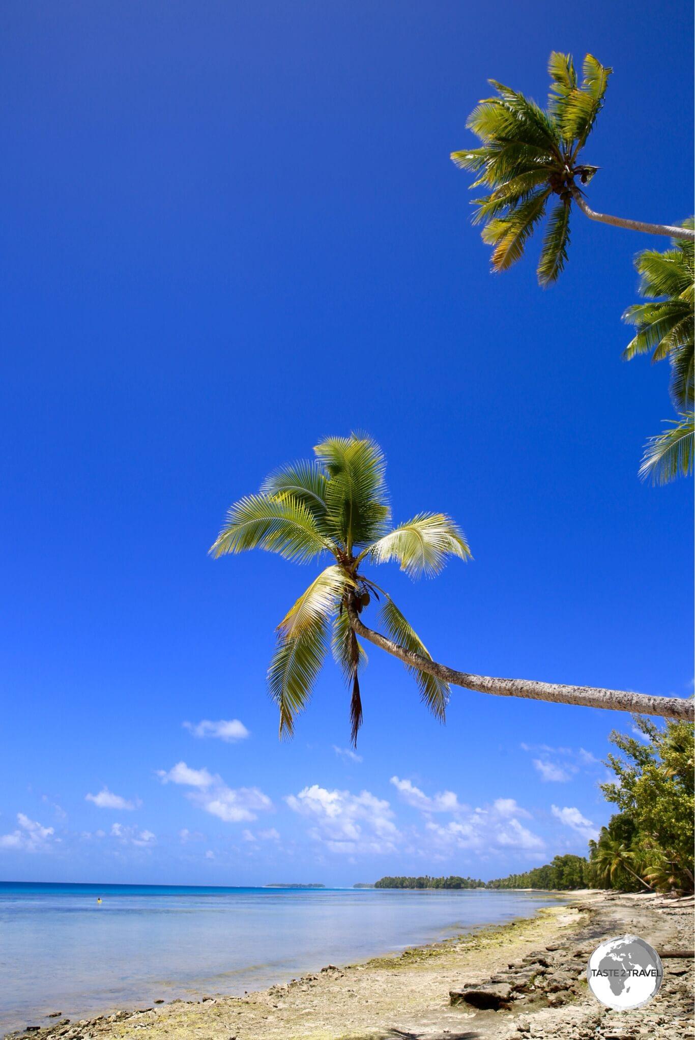 Palm trees on the lagoon side of Funafuti.