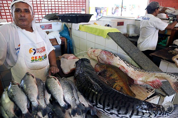 Lots of interesting fish from the Amazon River are on sale at the Mercado Modelo in Santerem.