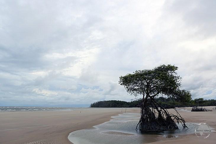 Marajo Island features miles of deserted, sandy beaches, including Praia doPesqueiro.