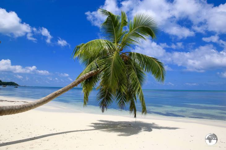 This lazy palm tree on Anse Takamaka appears on many postcards in the Seychelles.