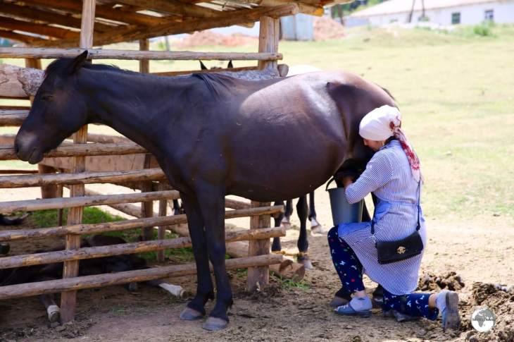 Milking a mare in the village of Jeti-Ögüz.