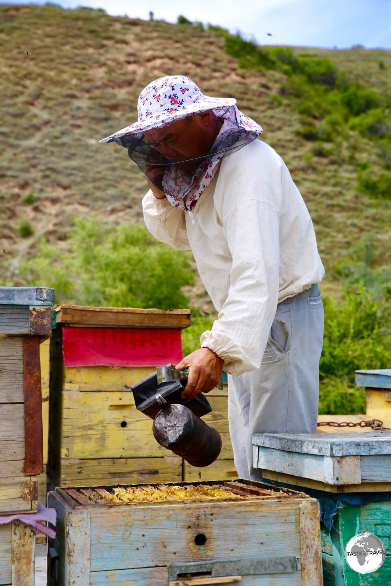 The bee keeper applying smoke to the newly-opened hive.