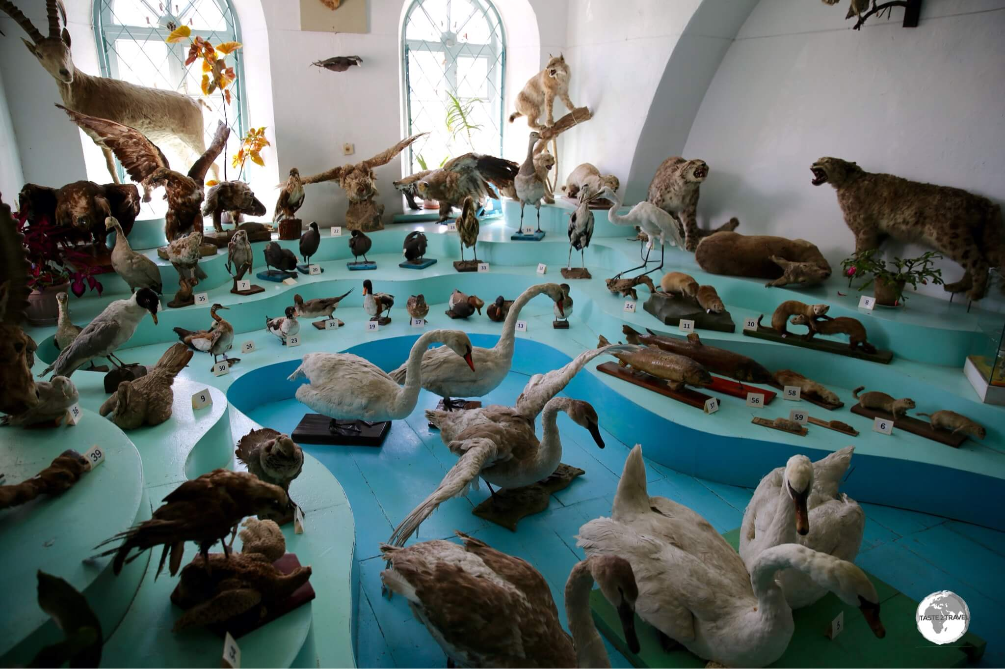 The large taxidermy display at the Karakol History Museum.