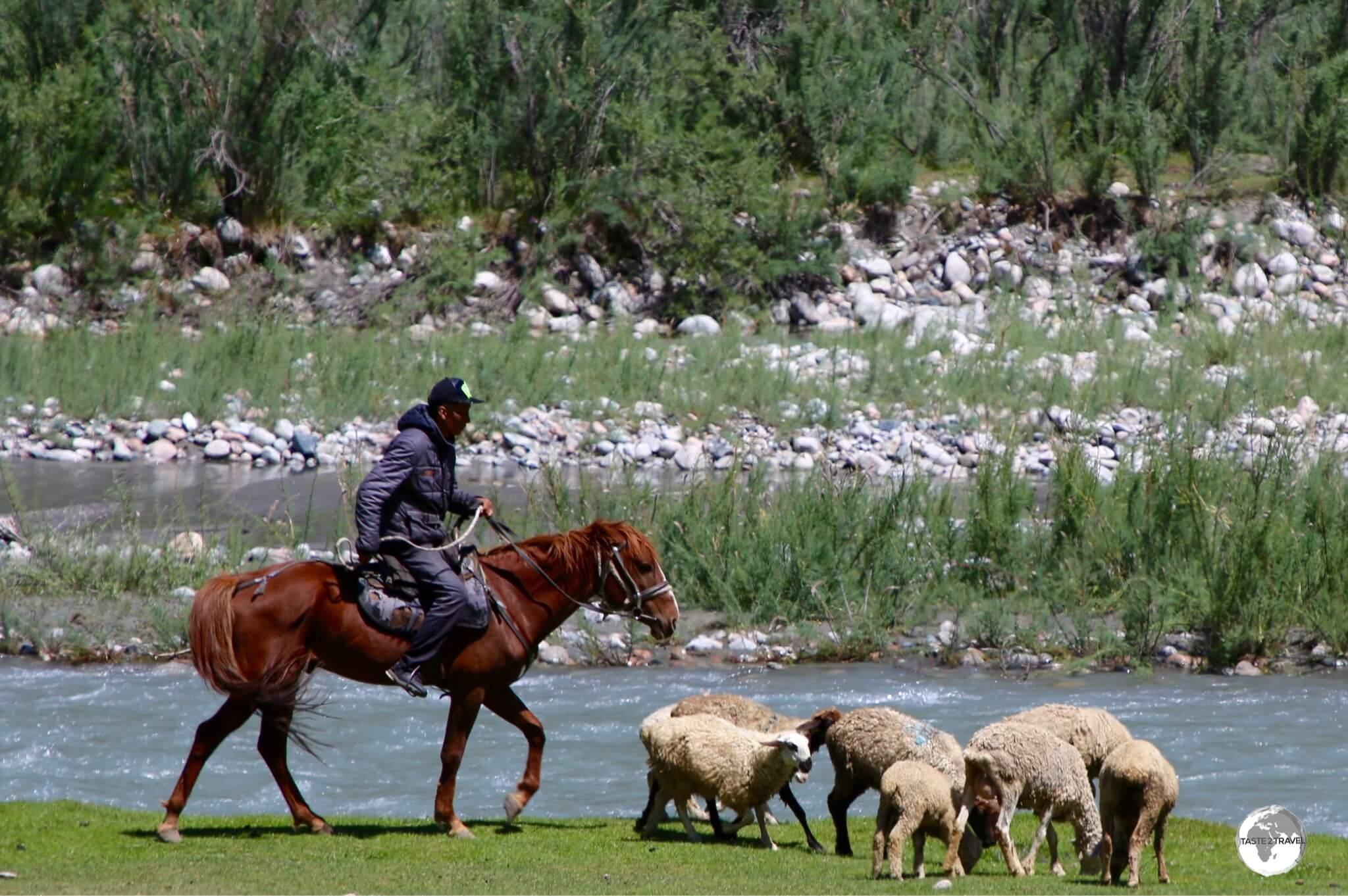 A shepherd mustering his flock in the Barskoon valley.