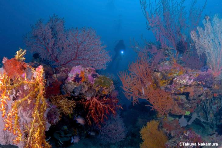 The diversity, colour, and size, of soft and hard corals on Langsam reef is impressive. Source: Tetsuya Nakamura