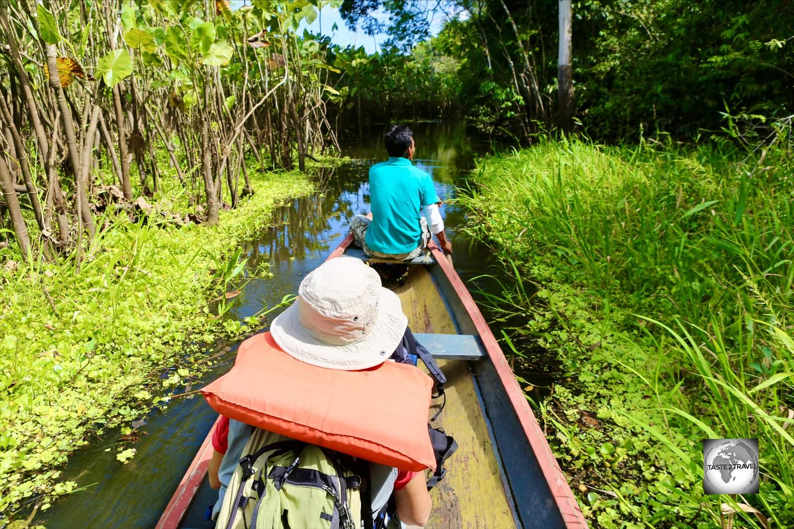 The kayak journey through an Amazon swamp to the Marasha Nature Reserve which lies in Peru opposite Leticia (Colombia).