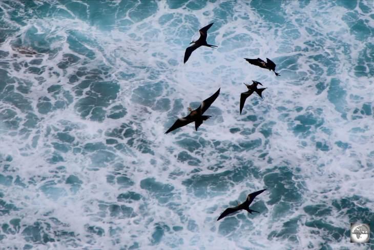 Frigatebirds flying over Flying fish Cove on Christmas Island.