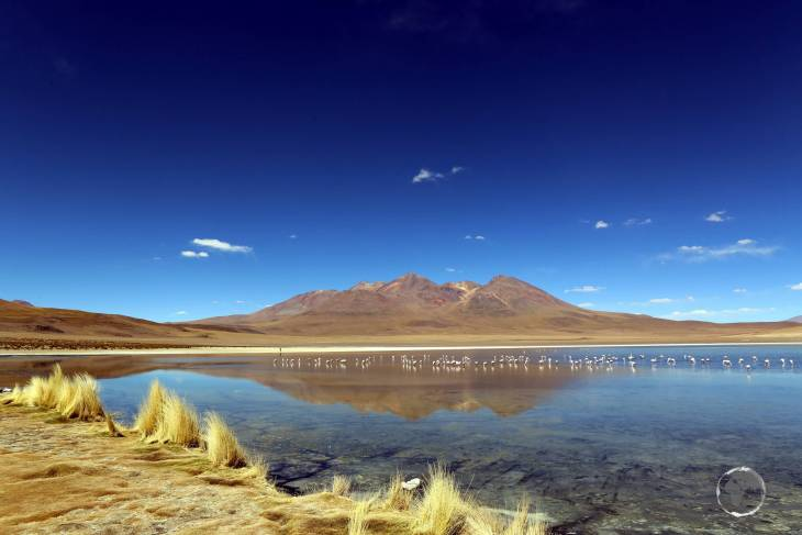 A view of Laguna Cañapa which lies at an elevation of 4,140 metres (13,582 ft) in the Bolivian altiplano.