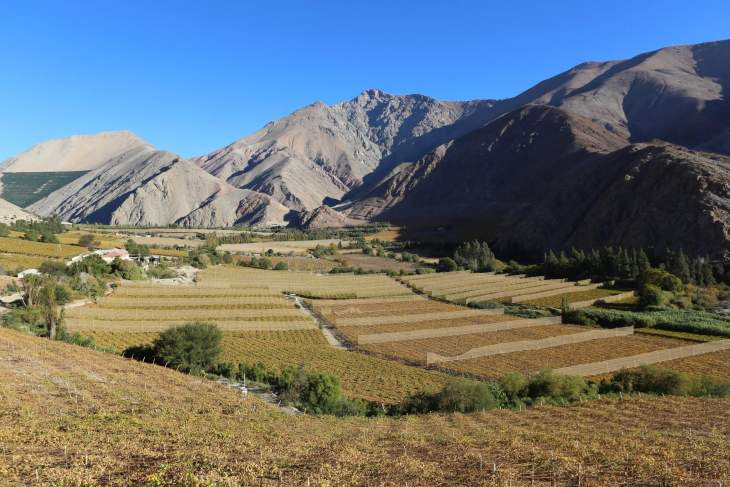 A view of vineyards in the Elqui valley, where grapes are grown for the production of Chilean Pisco.