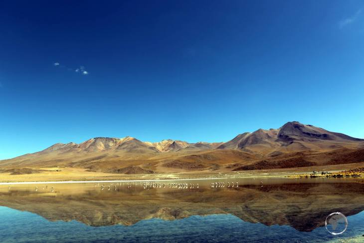 A view of Laguna Cañapa (Cañapa lagoon), a high-altitude saline lagoon which is surrounded by Andean flora and three volcanoes.