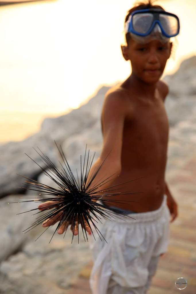 A young snorkeler in Santa Marta, handling a 'Diadema setosum', a species of long-spined sea urchin.
