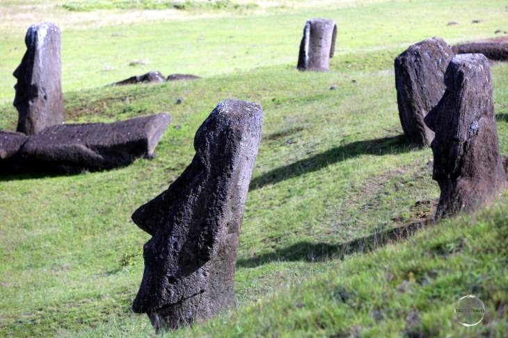 Many statues at Rano Raraku are buried halfway or more into the ground with all featuring a submerged torso, an example of which can be seen on the fallen statue on the left of this photo.