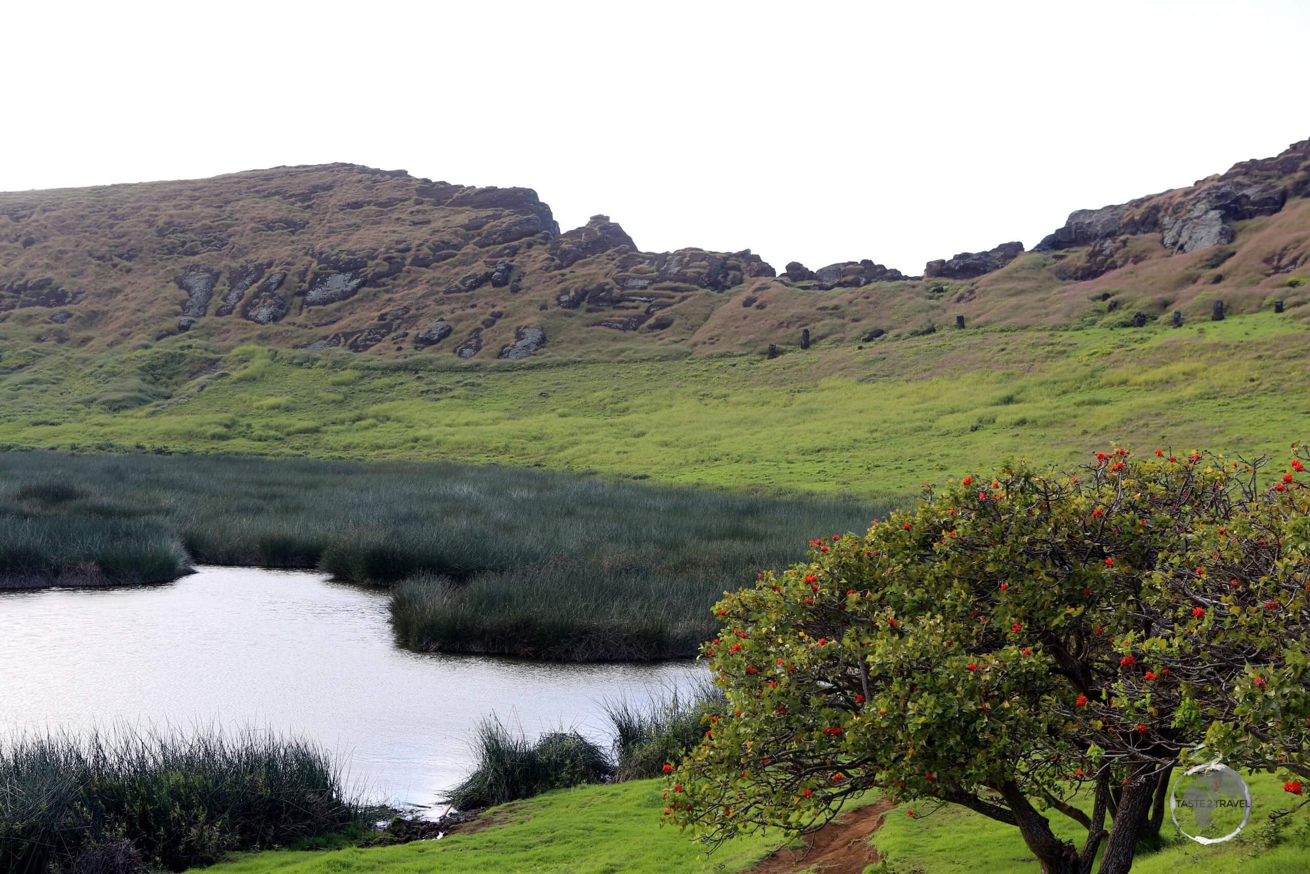 Rano Raraku, a volcanic crater located in the south-eastern corner of Easter Island, was the main quarry for the massive monolithic sculptures, known as moai, created by the Rapa Nui people.