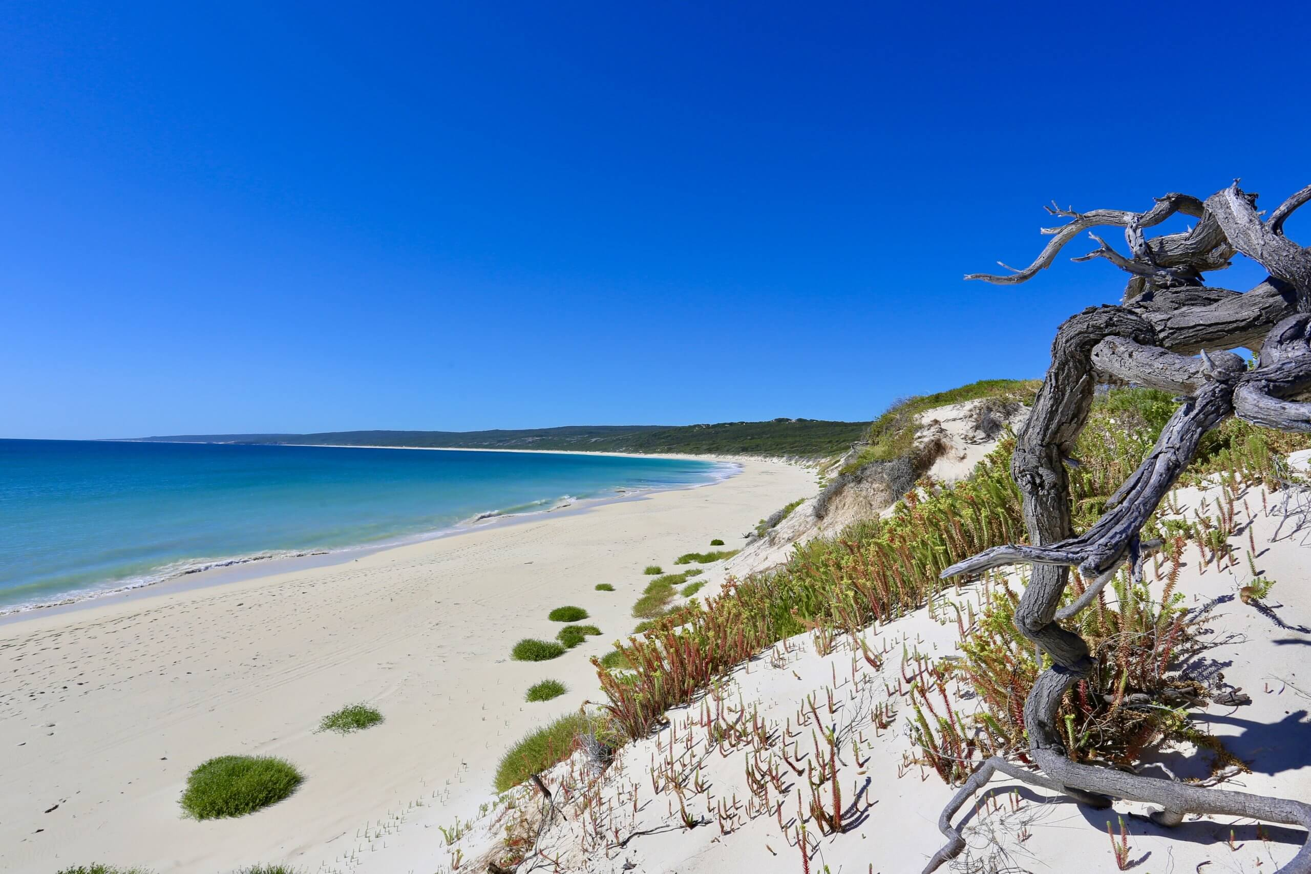 A panoramic view of Hamelin Bay.