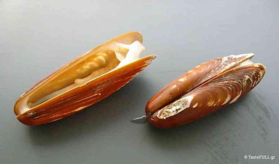 ostraka-petrosolines