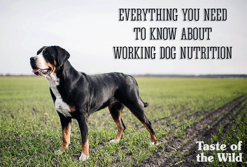 Working Dog Nutrition