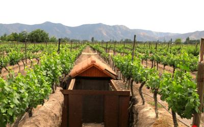 Chile Wine Tour