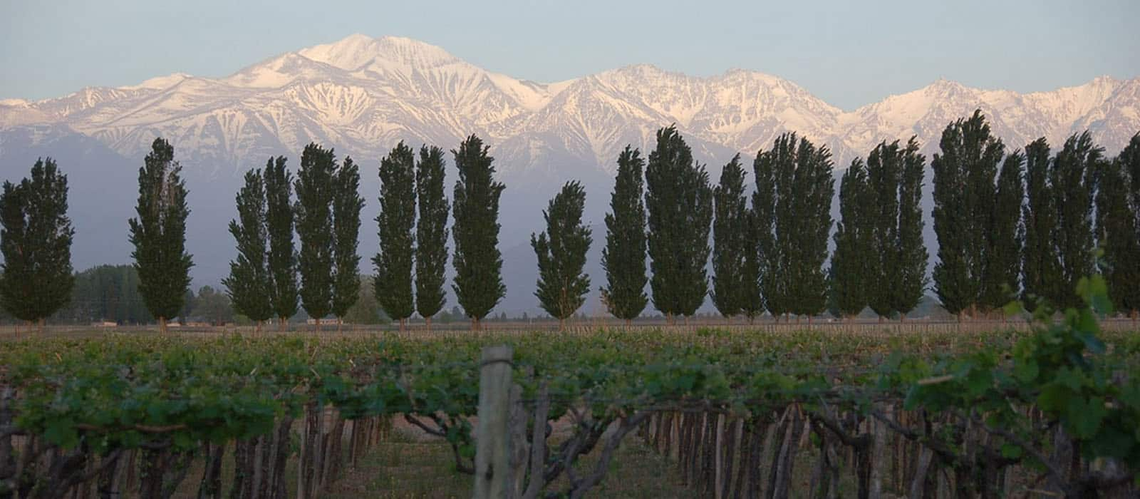 Chile & Argentina Wine Tour