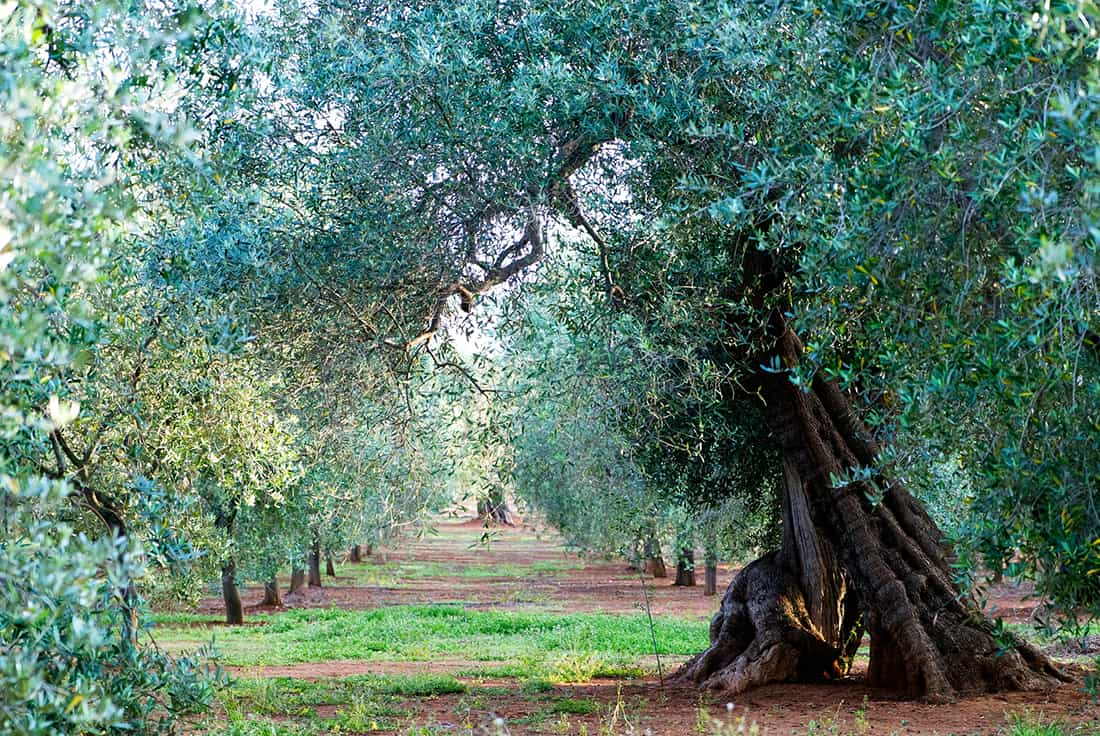 Italy orchard
