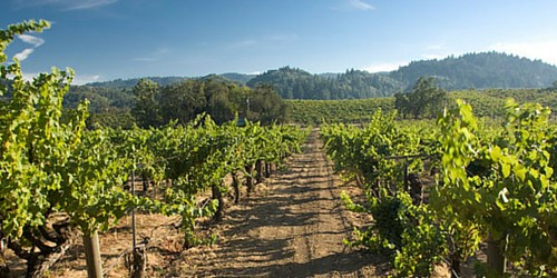 Sonoma Wine and Walking Tour - Day 2