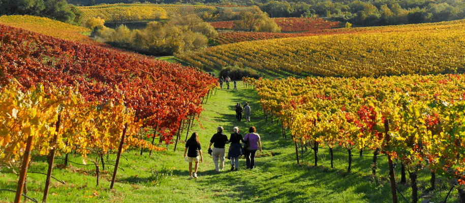 Sonoma Wine and Walking Tour