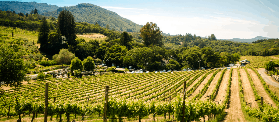 Extend Your Vacation: What To Do In Sonoma County Wine Country