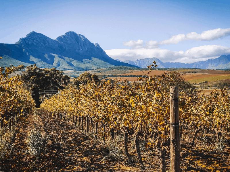 South Africa Wine Tour + Safari Add On